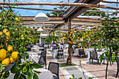Lime garden at La Zagara restaurant in Anacapri Island of Capri, Gulf of Naples, Italy