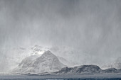 Snow storm over the sea with snowy mountains in the background, Lofoten, Nordland, Norway