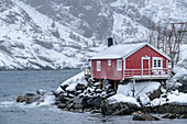 Norwegian red fisherman's house by the sea with snowy mountains in the background, Nusfjord, Lofoten, Nordland, Norway
