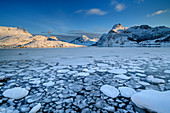 Ice floes floating in sea bay, snowy mountains in the background, Lofoten, Nordland, Norway