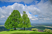 Two linden trees stand on a hill, Jusiberg, Swabian Alb, Baden-Württemberg, Germany