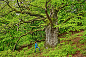 Woman stands in front of old oak, oak, Kellerwald-Edersee National Park, UNESCO World Heritage Old Beech Forests, Hesse, Germany