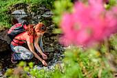 Frau beim Wandern schöpft Wasser aus Bergbach, Alpenrosen unscharf im Vordergrund, Zillertaler Höhenstraße, Zillertal, Tuxer Alpen, Tirol, Österreich