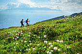 Man and woman hiking through meadows with alpine roses and cotton grass, Zillertaler Höhenstraße, Zillertal, Tux Alps, Tyrol, Austria