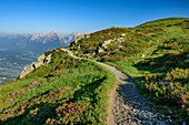Hiking trail leads through alpine roses, Karwendel in the background, Kellerjochhütte, Tux Alps, Tyrol, Austria