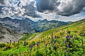 Wiese mit blühendem Eisenhut vor Allgäuer Alpen, Bockkarscharte, Jubiläumsweg, Allgäuer Alpen, Oberallgäu, Allgäu, Schwaben, Bayern, Deutschland