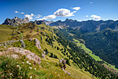 Mountain meadows in front of the Marmolada group, Val San Nicolo and Uomo group, Sass d´Adam, Dolomites, UNESCO World Heritage Dolomites, South Tyrol, Italy