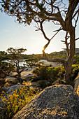 Küstenlandschaft und einsamer Sandstrand, bei Sartène, Département Corse-du-Sud, Korsika, Frankreich