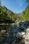 Alte Genueserbrücke, Sampolu, bei Ghisonaccia, Département Corse-du-Sud, Korsika, Frankreich