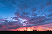 Silhouette Verschiedener Bäume auf einer Landstraße im roten Licht der untergehenden Sonne. Dramatische Farben und Wolken-Formationen sind am Himmel, Deutschland, Brandenburg, Neuruppin