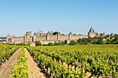 Frankreich, Aude, Carcassonne, mittelalterliche Stadt, UNESCO Weltkulturerbe, Weinberge umgeben die mittelalterliche Stadt