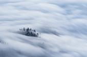 Baumgruppe ragt aus umherziehenden Nebelmeer heraus, Inntal, Tirol, Österreich
