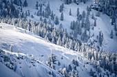 Verschneite Bäume auf sonnenbeschienen Bergrücken, Pertisau, Tirol, Österreich