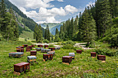 Honeybees in beehives stand in the middle of the pamorama of the mountains of the Allgäu. Germany, Bavaria, Oberallgäu