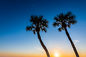 Palm trees in the sunset light, Fort Myers Beach, Florida, USA