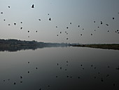 2018, Vrindavan, Uttar Pradesh, India, birds in the Yamuna