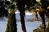 Palm trees on the lakeshore at Varenna on the east side, Lake Como, Lombardy, Italy