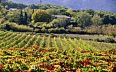 Wine fields on the Pont Julien in Luberon, Provence, France