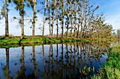the Nieplitz near Stangenhagen, Nuthe-Nieplitz Nature Park, State of Brandenburg, Germany
