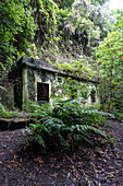 View of an old generator house on a hiking trail in the laurel forest of Los Tilos, UNESCO biosphere reserve, La Palma, Canary Islands, Spain, Europe
