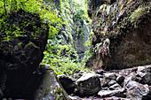 Canyon, Los Tilos laurel forest, UNESCO biosphere reserve, La Palma, Canary Islands, Spain, Europe