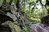 View of a stone wall along a hiking trail in the laurel forest of Los Tilos, UNESCO biosphere reserve, La Palma, Canary Islands, Spain, Europe