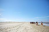 Reitergruppe auf Islandpferden, riesiger Strand an Ostplate, Insel Spiekeroog, Wattenmeer, Ostfriesland, Niedersachsen, Deutschland