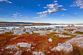Red grasses on the east bank of Mono Lake in summer, California, USA