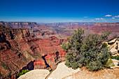 Busch und Schluchten des Grand Canyon am South Rim bei Sonne mit blauem Himmel, Arizona, USA