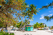 View of palm tree fringed Worthing Beach, Barbados, West Indies, Caribbean, Central America