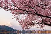 Sunrise over Mount Fuji reflecting in Lake Kawaguchi, Japan, Asia