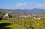 France, Bas Rhin, Wine Route, Andlau, Chapelle Saint Andre and vineyard