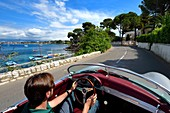 France, Alpes Maritimes, Antibes, Cap d'Antibes, along the Gulf Juan on the Boulevard Maréchal Juin aboard a collection convertible Porsche Speedster 356