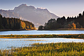 Autumn at Forggensee, view of Neuschwanstein Castle and Säuling, Allgäu, Bavaria, Germany