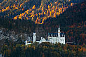 Autumn forest at Neuschwanstein Castle, Allgäu, Bavaria, Germany