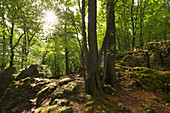 Celtic hill settlement on the Hochberg, near Mittelburg, Franconian Jura, Frankenalb, Franconia, Bavaria, Germany