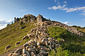 Shepherd with sheep in front of the Wiesenthauer Nadel on the rock plateau Walberla, near Forchheim, Franconian Switzerland, Franconia, Bavaria, Germany