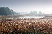 Hoarfrost and fog, Altarm der Oder, Oderbruch, Brandenburg, Germany