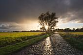 Kopfsteinpflaster nach dem Regen, Weide an einem Weg, Oderbruch, Brandenburg, Deutschland