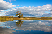 Pasture on an old arm of the Oder, Oderbruch, Brandenburg, Germany
