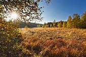 Schwarzes Moor, Rhön, Bayern, Deutschland