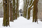 Kastanienallee in winter at the moated castle Haus Kemnade, near Hattingen, Ruhr area, North Rhine-Westphalia, Germany