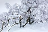 Birch, winter landscape on the Hohen Hagen near Winterberg, Sauerland, North Rhine-Westphalia, Germany