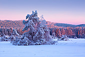 Winter landscape on the Hohen Hagen near Winterberg, Sauerland, North Rhine-Westphalia, Germany