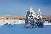 Winter landscape on the Hohen Hagen near Winterberg, Sauerland, North Rhine-Westphalia, Germany