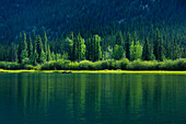Canoeists on the Yukon River in front of a pine forest. Yukon River, Yukon, Canada