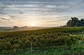 Frankreich, Gironde, Anglade, Landschaft rund um das Dorf