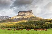 France, Isere, Parc Naturel Regional du Vercors (Natural regional park of Vercors), Trieves, Richardiere, Mont Aiguille (2086m)