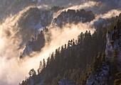 France, Isere, Parc Naturel Regional du Vercors (Natural regional park of Vercors), Trieves, said place la Bachasse under the Tete de Praorzel (1691m), seen crests of Essaure pass