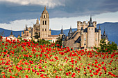 The imposing Gothic Cathedral and the Alcazar of Segovia with poppies in the foreground, Segovia, Castilla y Leon, Spain, Europe